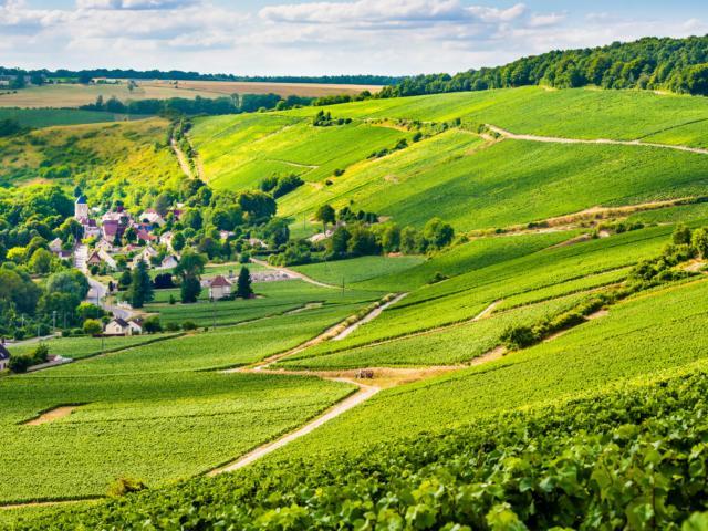 Panorama Vignoble Barzy-Sur-Marne