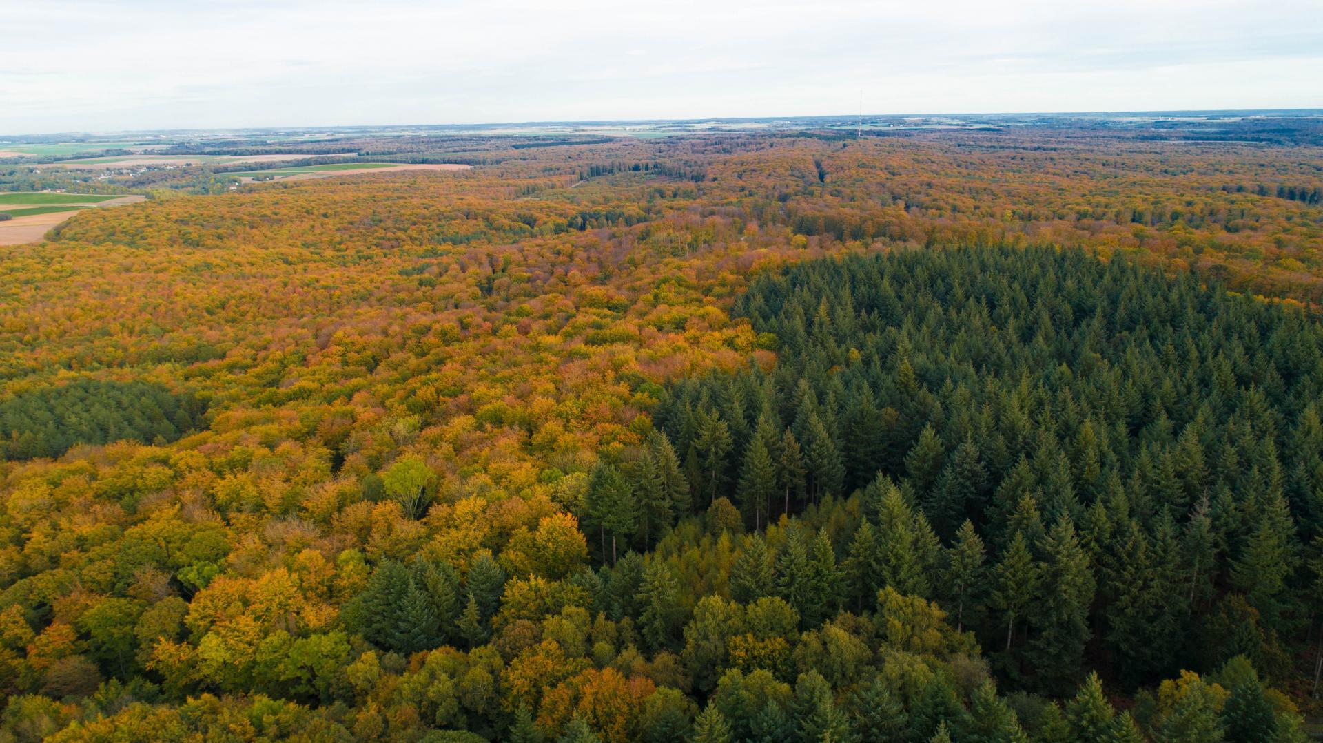 Forêt De Retz (2)